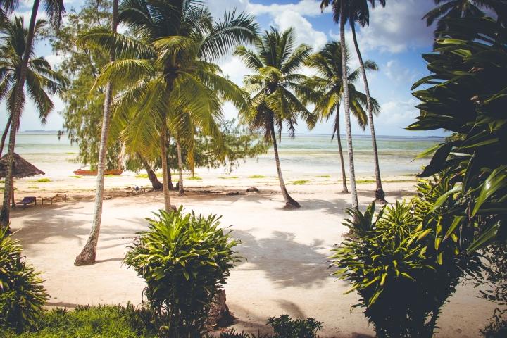 21_BeachAndPalmtrees
